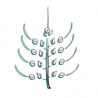 Explosionszeichnung eines Weizens. Man sieht Stängel, Spreu und Weizenkorn.